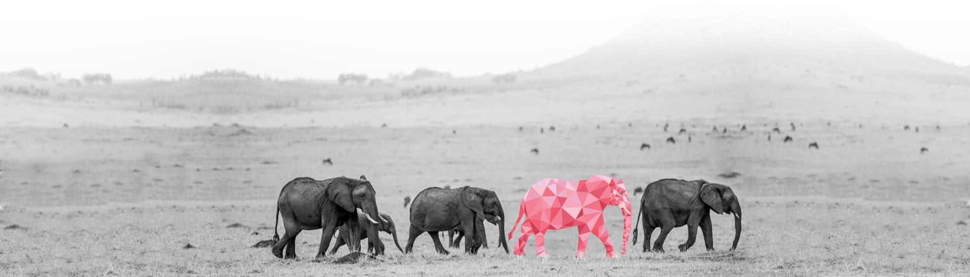 background--elephant-design